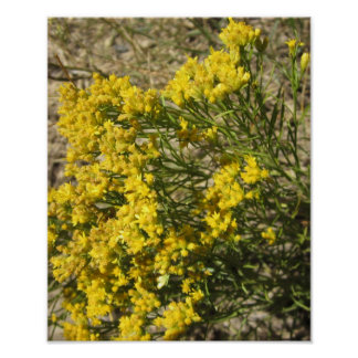 Yellow Coulee Wildflowers Photo Poster