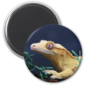 Yellow Crested Gecko Resting Magnet