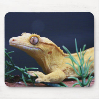 Yellow Crested Gecko Resting Mouse Mat