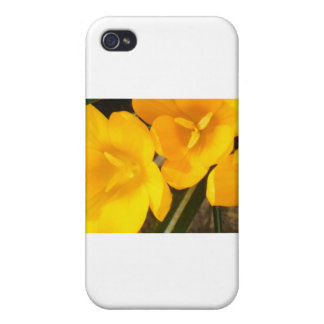 yellow crocus design cover for iPhone 4