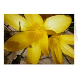 Yellow Crocuses Note Card