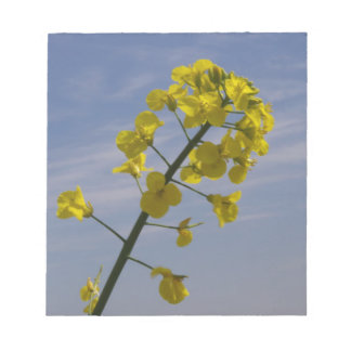 Yellow Crop Flower on Blue Sky background Notepad