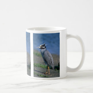 Yellow-crowned Night Heron Mugs