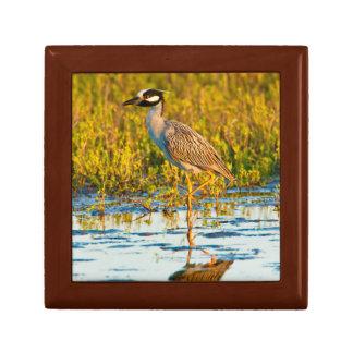 Yellow-Crowned Night-Heron (Nyctanassa Violacea) Gift Box