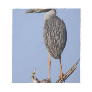 Yellow-crowned Night-Heron, Nyctanassa violacea, Notepad