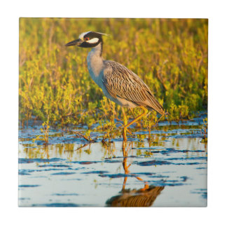 Yellow-Crowned Night-Heron (Nyctanassa Violacea) Small Square Tile