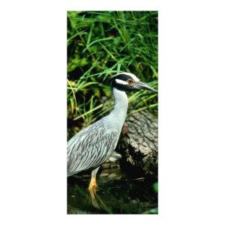 Yellow-crowned Night Heron 10 Cm X 23 Cm Rack Card