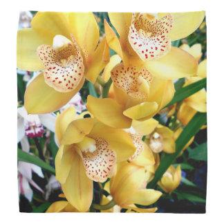 Yellow Cymbidium Orchids Bandana