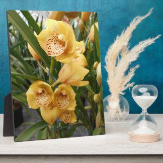 Yellow Cymbidium Orchids Plaque