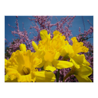 Yellow Daffodil Flowers art prints Nature Floral