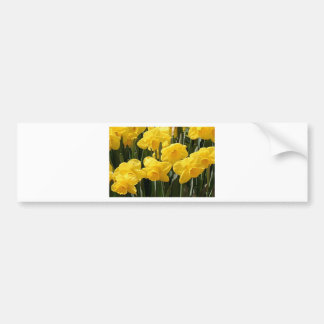 Yellow Daffodil flowers in bloom Bumper Stickers