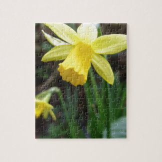 Yellow Daffodil In Soft Focus Jigsaw Puzzle