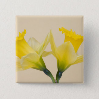 Yellow daffodils 15 cm square badge