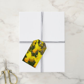 Yellow Daffodils Floral Gift Tags