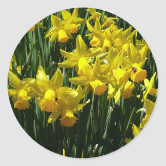 Yellow Daffodils I Cheery Spring Flowers Classic Round Sticker