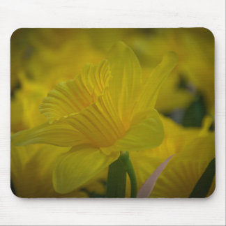 Yellow daffodils mousepad