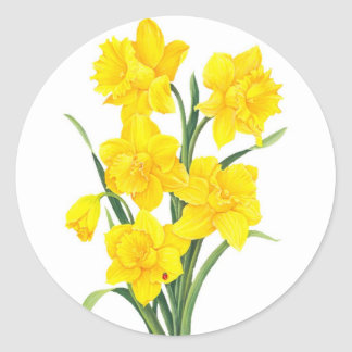 Yellow Daffodils Round Sticker