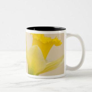 Yellow daffodils Two-Tone coffee mug