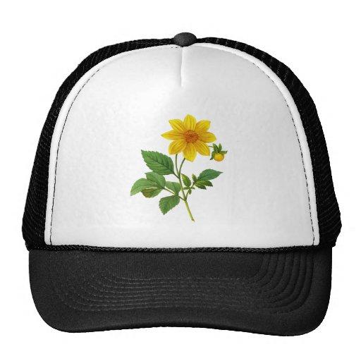 Yellow Dahlia by Pierre-Joseph Redoute Trucker Hats