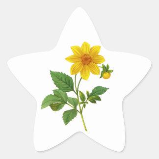 Yellow Dahlia by Pierre Joseph Redoute Star Sticker