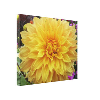 Yellow Dahlia canvas print