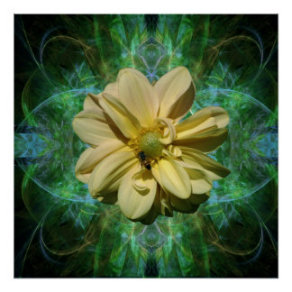 Yellow Dahlia flower and meaning Print