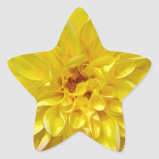 Yellow dahlia flower blossoms star sticker