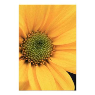 Yellow Daisy Close Up Photo Print