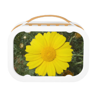 Yellow Daisy custom lunch boxes