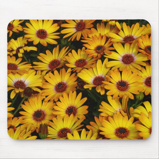 Yellow daisy flowers in spring mousepad