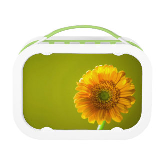 Yellow Daisy Gerbera Flower Lunch Box