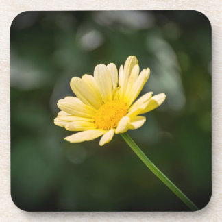 Yellow daisy hard plastic coasters