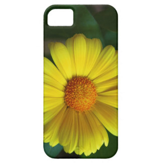 Yellow daisy iPhone 5 cases