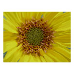 Yellow Daisy Posters