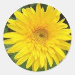 Yellow Daisy Round Sticker