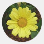 Yellow Daisy Round Stickers