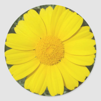 Yellow Daisy stickers