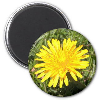 Yellow dandelion flower nature photo magnet