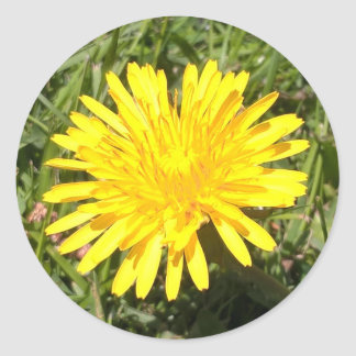 Yellow dandelion flower nature photo sticker
