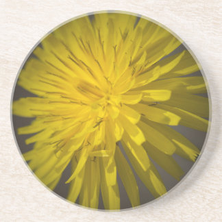 yellow dandelion in the meadow coaster