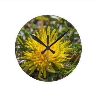 yellow dandelion wallclocks