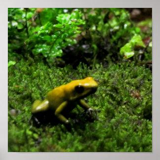 Yellow Dart Frog Poster