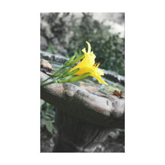 Yellow Daylily Birdbath Canvas Prints