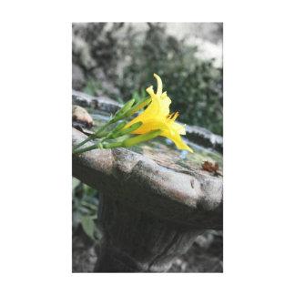 Yellow Daylily Birdbath Gallery Wrap Canvas