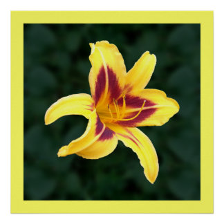 Yellow Daylily Flower with Red, Hemerocallis: Poster