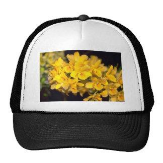 yellow Dendrobium flowers Hat