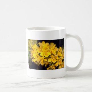 yellow Dendrobium flowers Mugs