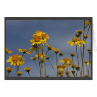 Yellow desert wildflower card