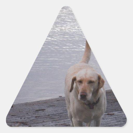 Yellow Dog on dock Yellow Labrador retriever Stickers
