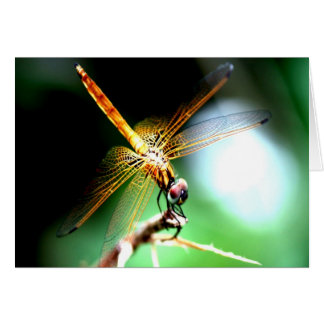 yellow dragonfly peace joy greeting cards